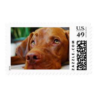 VIZSLA - stamp