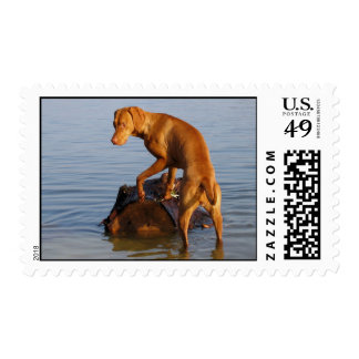 Vizsla Stamp