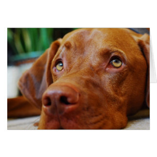 Vizsla - Thinking of you Greeting Card