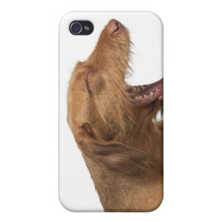 Vizsla yawning in front of white back ground iPhone 4 covers