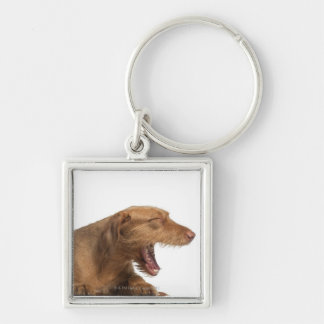 Vizsla yawning in front of white back ground Silver-Colored square keychain
