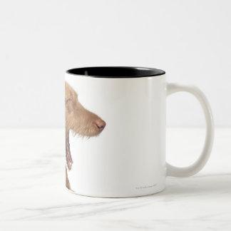 Vizsla yawning in front of white back ground Two-Tone coffee mug