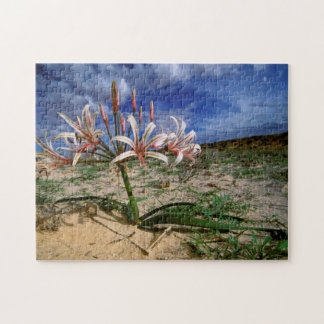 Vlei Lily (Nerine Laticoma) In Flower Jigsaw Puzzle