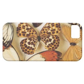 Vlinder del Het collectie van de iPhone 5 Cárcasa