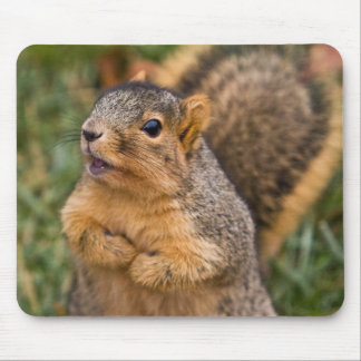 Vocal Begging Mouse Pad