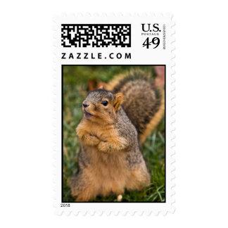 Vocal Begging Postage Stamps
