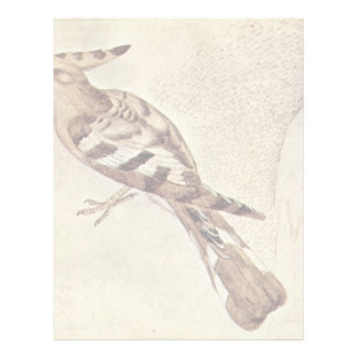 Vogel By Pisanello (Best Quality) Letterhead
