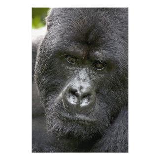 Volcanes NP, Rwanda, gorilas de montaña, Arte Fotografico