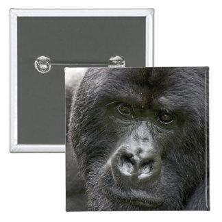 Volcanes NP, Rwanda, gorilas de montaña, Pin Cuadrado