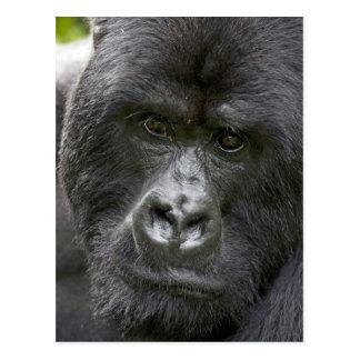 Volcanes NP, Rwanda, gorilas de montaña, Postal