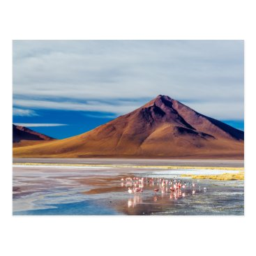 JKTravelPhotos Volcano and Flamingoes Postcard