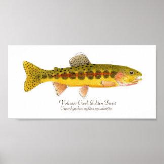 Volcano Creek Golden Rainbow Trout Poster