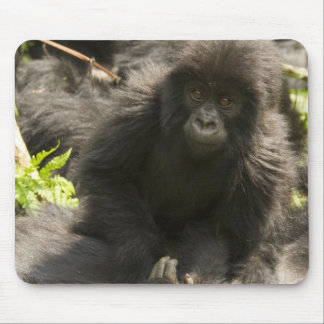 Volcanoes National Park, Mountain Gorilla, baby Mouse Pad