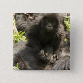 Volcanoes National Park, Mountain Gorilla, baby Pinback Button