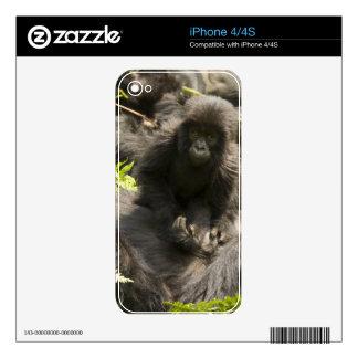 Volcanoes National Park Mountain Gorilla baby iPhone 4S Skins