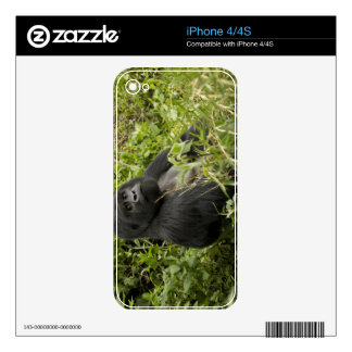 Volcanoes National Park, Mountain Gorilla Decal For iPhone 4S