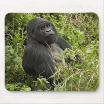 Volcanoes National Park, Mountain Gorilla Mouse Pad