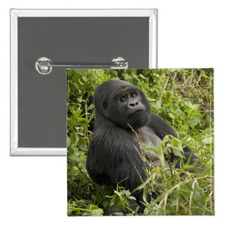 Volcanoes National Park, Mountain Gorilla Pinback Button