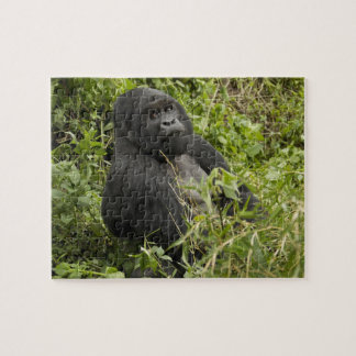 Volcanoes National Park, Mountain Gorilla Puzzles