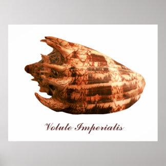 Volute Imperialis Poster