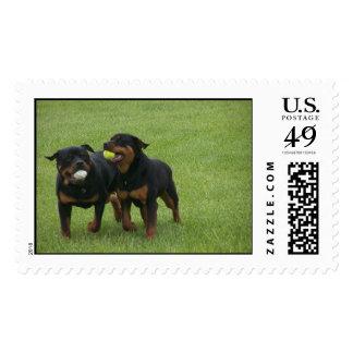 Von Aufstand Rottweilers Postage