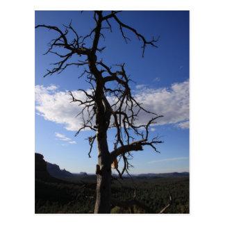 Vortex Tree With a Twist Postcard