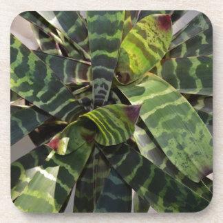 Vriesea Splendens Bromeliad Plant Striped Leaves Beverage Coaster