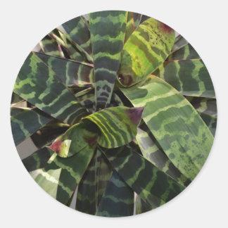 Vriesea Splendens Bromeliad Plant Striped Leaves Classic Round Sticker