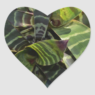 Vriesea Splendens Bromeliad Plant Striped Leaves Heart Sticker