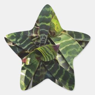 Vriesea Splendens Bromeliad Plant Striped Leaves Star Sticker