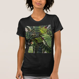 Vriesea Splendens Bromeliad Plant Striped Leaves T-Shirt