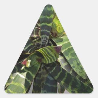 Vriesea Splendens Bromeliad Plant Striped Leaves Triangle Sticker