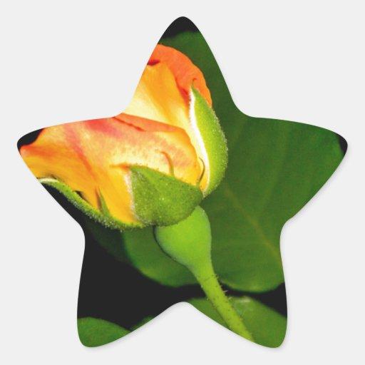 Vudú subió pegatina en forma de estrella