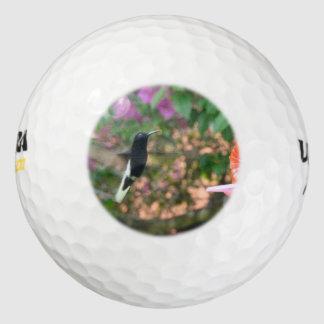 Vuelo blanco y negro del colibrí en un alimentador pack de pelotas de golf