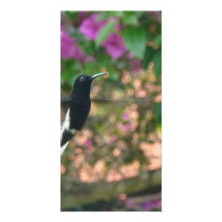 Vuelo blanco y negro del colibrí en un alimentador tarjeta fotografica personalizada