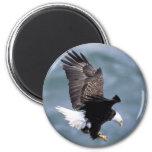 Vuelo de Eagle Imanes Para Frigoríficos