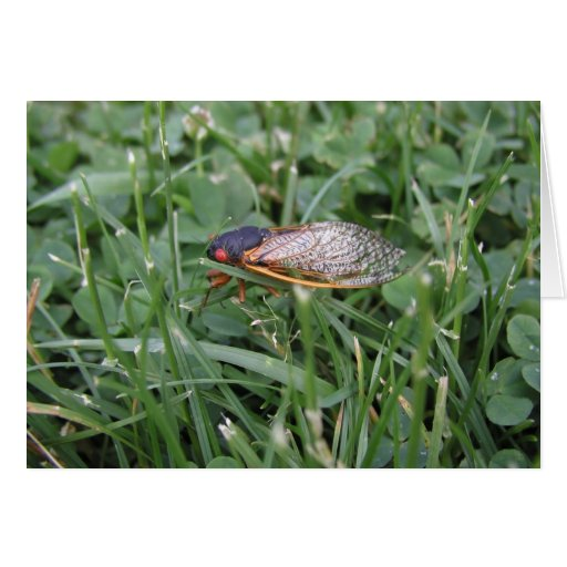 Vuelo de la cigarra en la hierba en Maryland, Colu Tarjeta