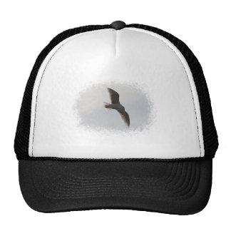 Vuelo de la gaviota de arriba gorra