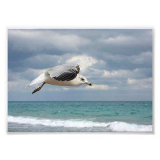 Vuelo de la gaviota fotografía