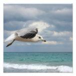 Vuelo de la gaviota fotografias