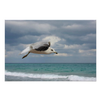 Vuelo de la gaviota póster