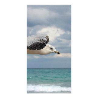 Vuelo de la gaviota plantilla para tarjeta de foto