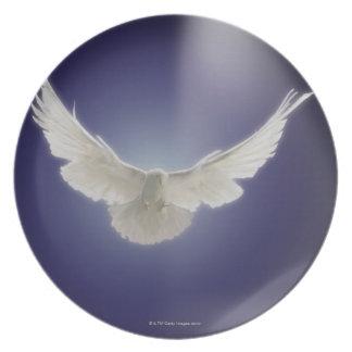 Vuelo de la paloma a través del haz de luz plato de comida