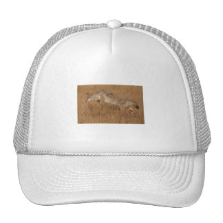 Vuelo del coyote gorras de camionero