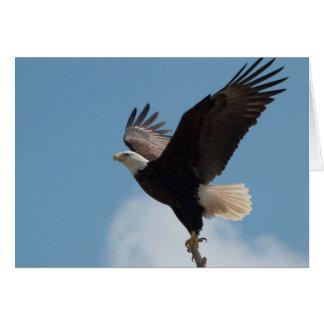 Vuelo del Takin de Eagle calvo - tarjeta del arte