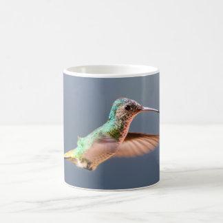 Vuelo femenino atado de oro del zafiro del colibrí taza de café