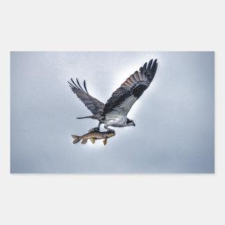 Vuelo Osprey con la foto de HDR de los pescados de Pegatina Rectangular