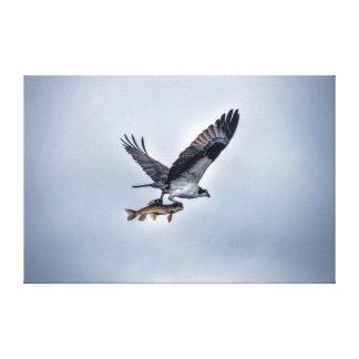 Vuelo Osprey con los pescados del río de los Impresión En Lienzo