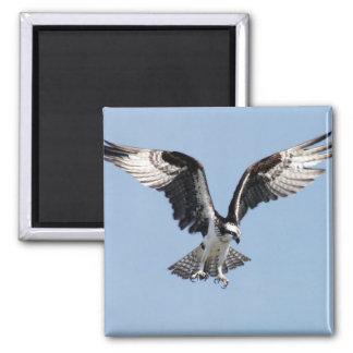 Vuelo Osprey Imán Cuadrado