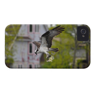 Vuelo Osprey que caza para los pescados iPhone 4 Cobertura